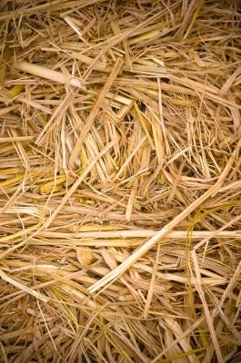 hinnamsaisuy / FreeDigitalPhotos.net